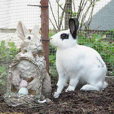 Blanco - Statue and Bunny.jpg