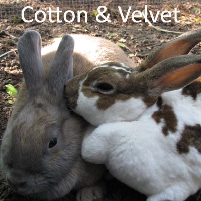Cotton and Velvet1.jpg