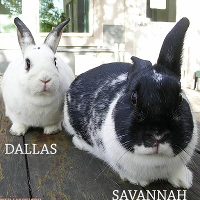Dallas and SavannahA.jpg